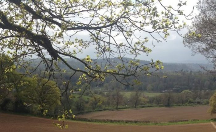 Spring's magic in a SussexWood
