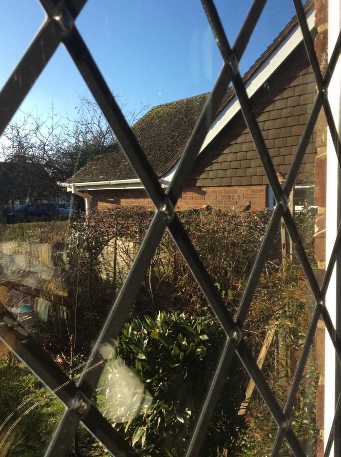 Noisy parrows outside the window