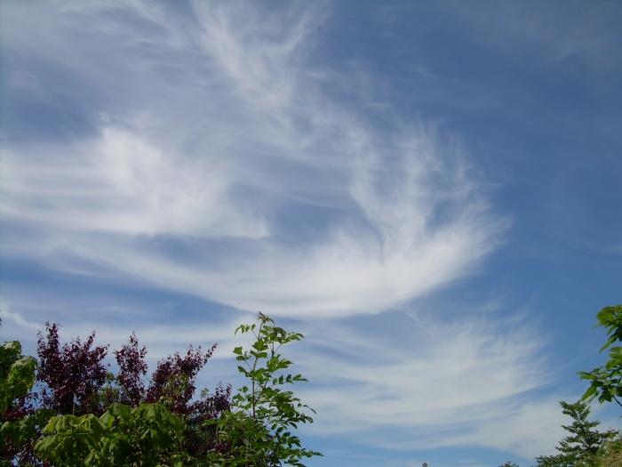 wind blown clouds