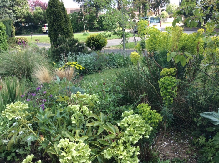A display of contrasting greens in the spring garden