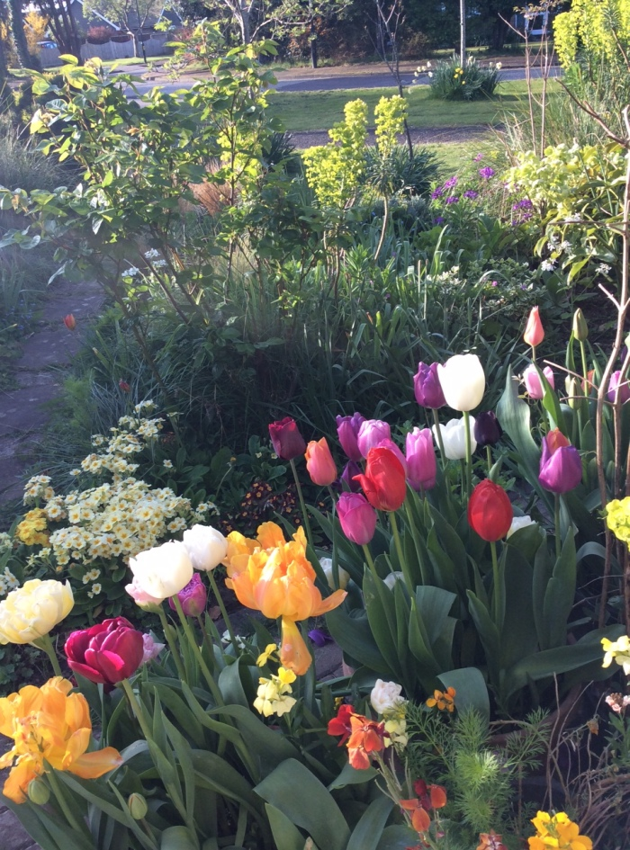 A bright collection of tulips filling two tubs