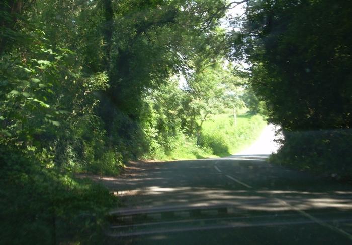 Leafy green summer lane