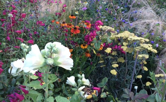 An Adventurous Gardener