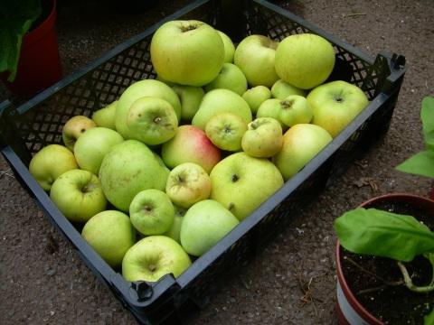 Apple 'Arthur Turner'