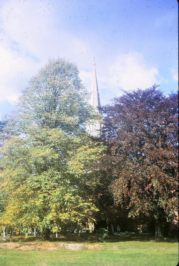 Church steeple showing through trees