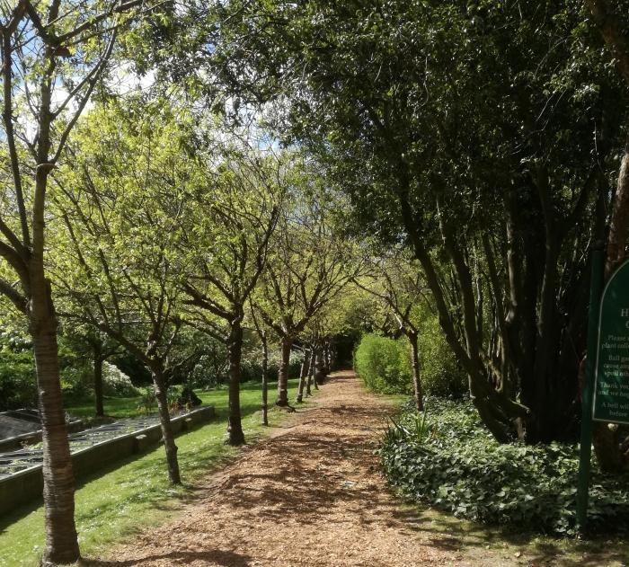 A garden for Song Thrushes