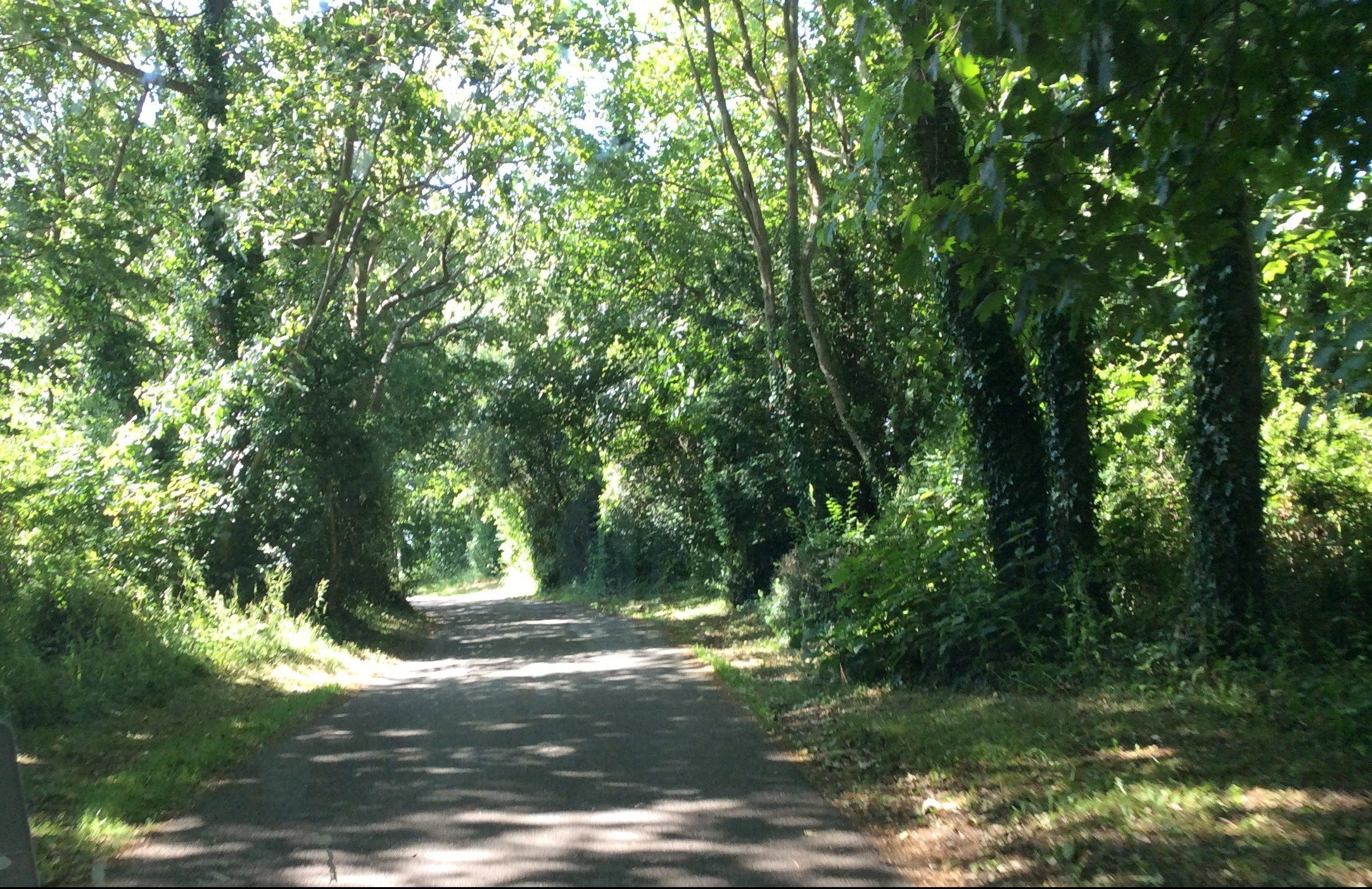 A lane through the woods