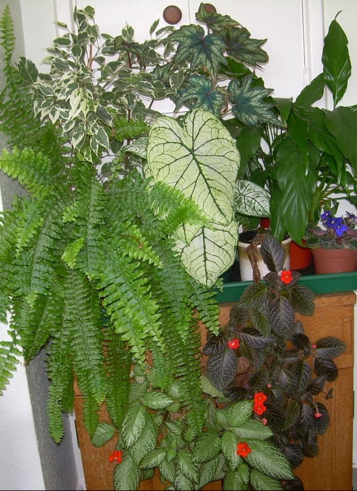 Indoor display of green houseplants.