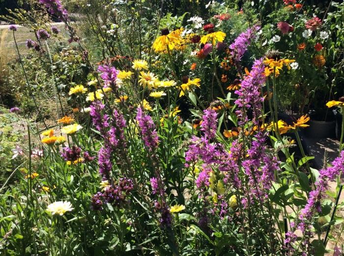 Bright display of September flowers