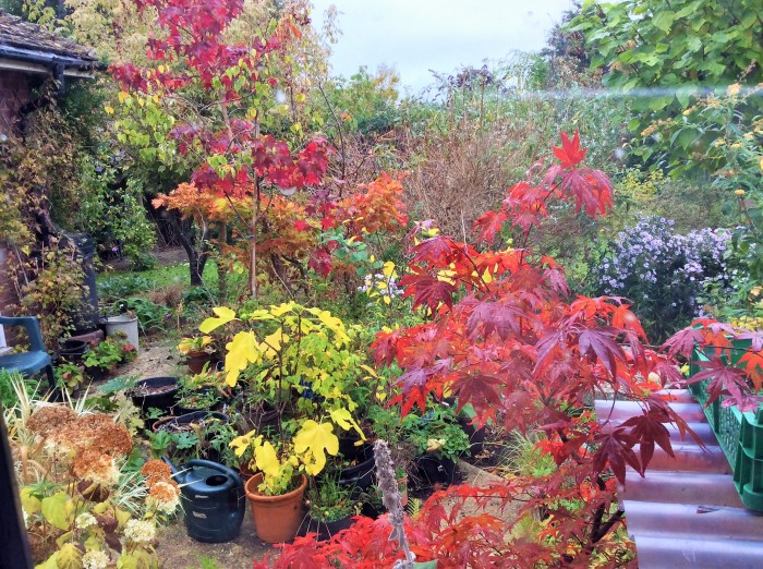 Autumn colours in the garden