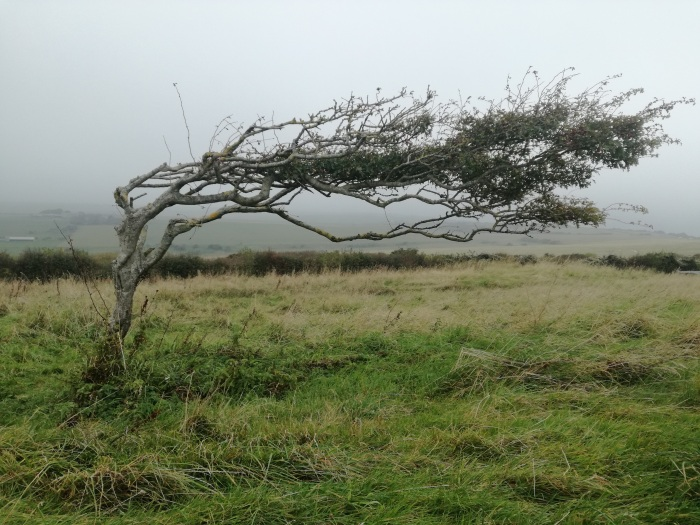 Tree blown by the autumn gale