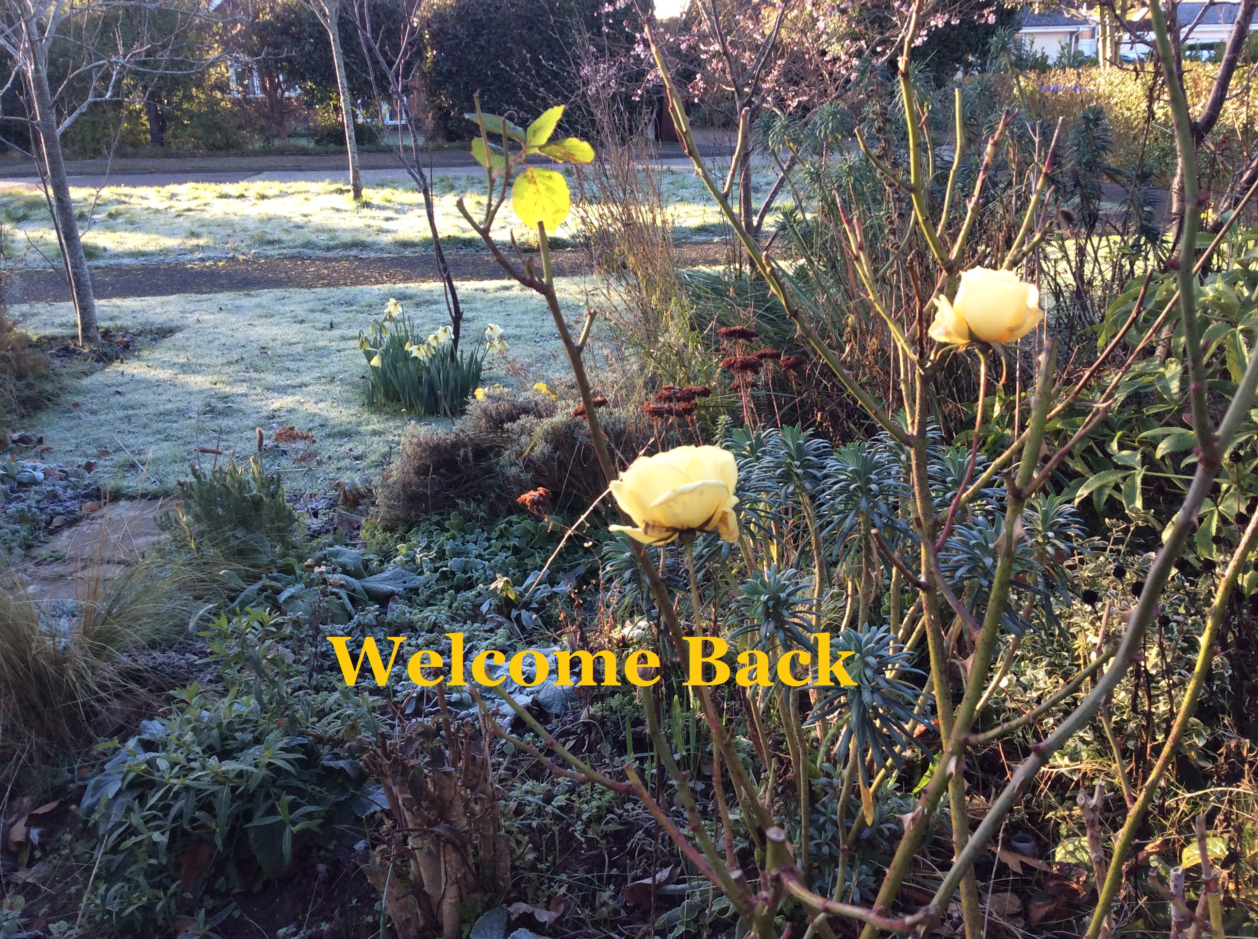Welcome back- January garden photo