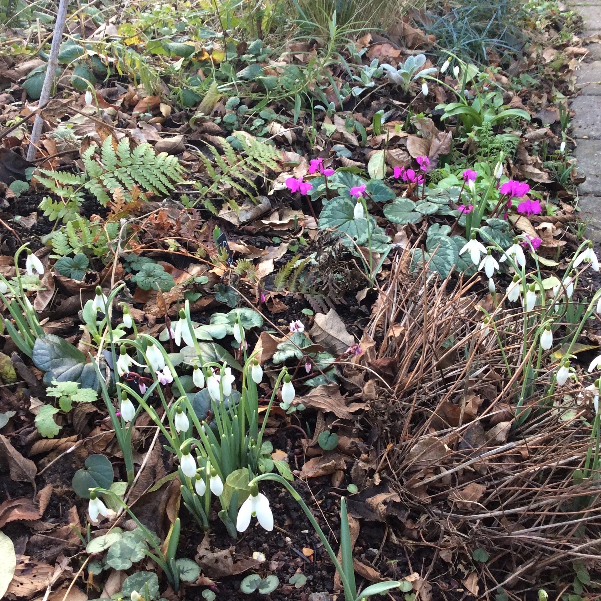 winter garden flowers