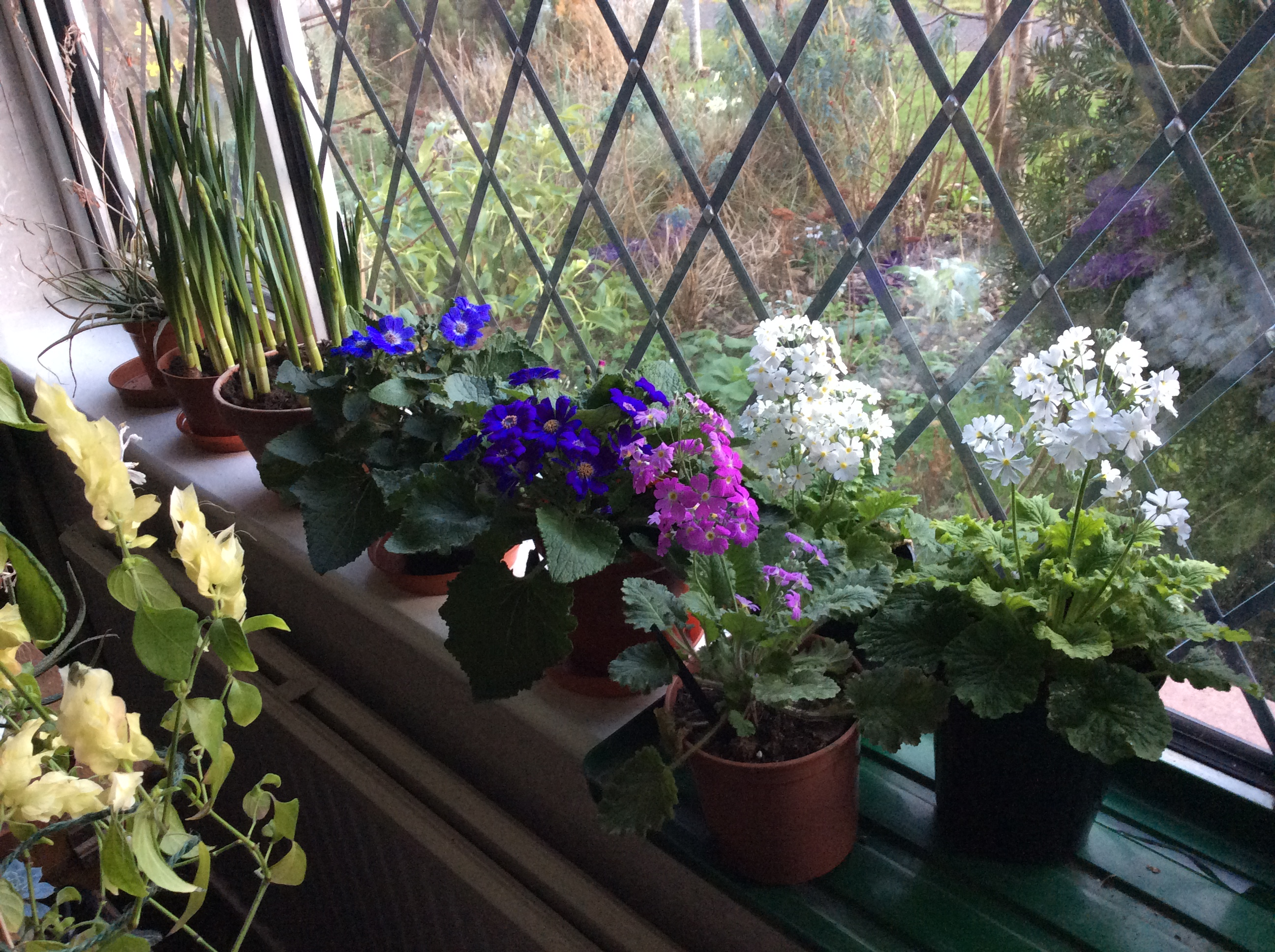 indoor winter flowering plants