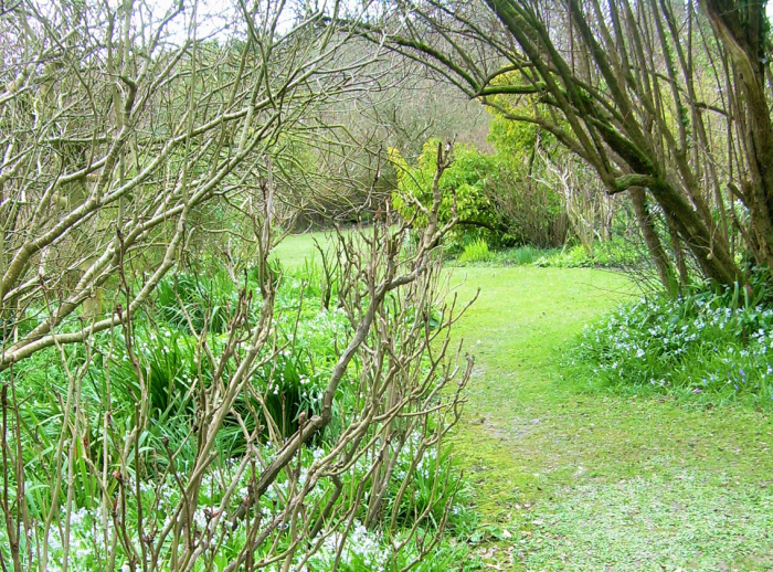 Woodland garden in April
