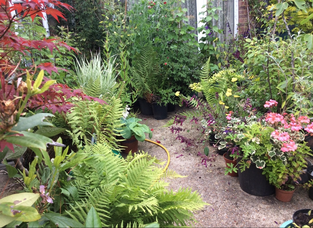 Display of patio plants in pots