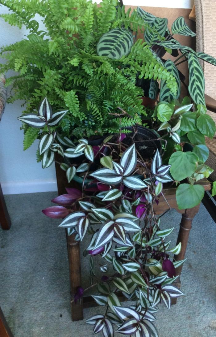 Indoor fo;iage plants