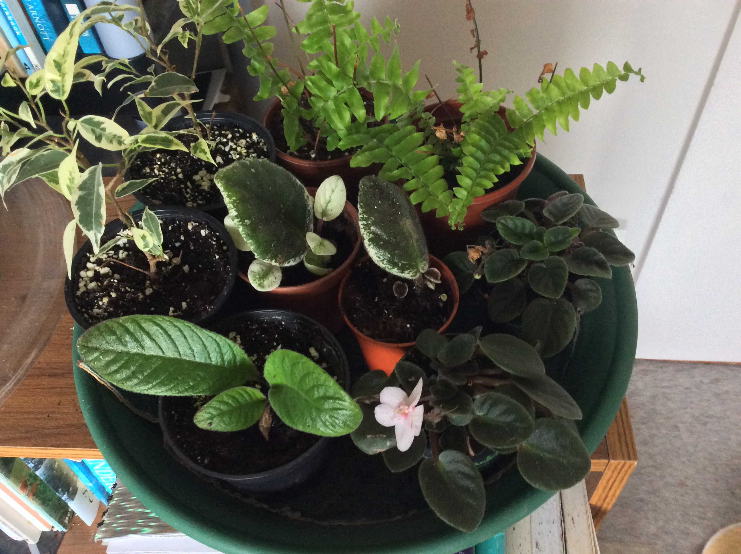 houseplant cuttings