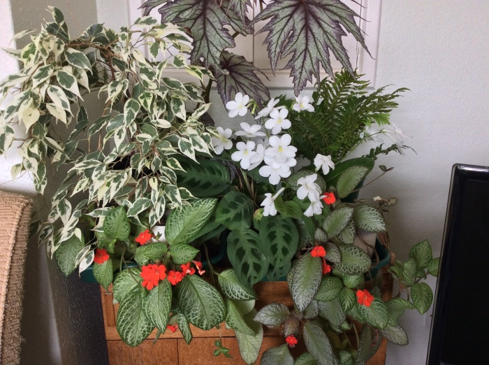 Houseplant display