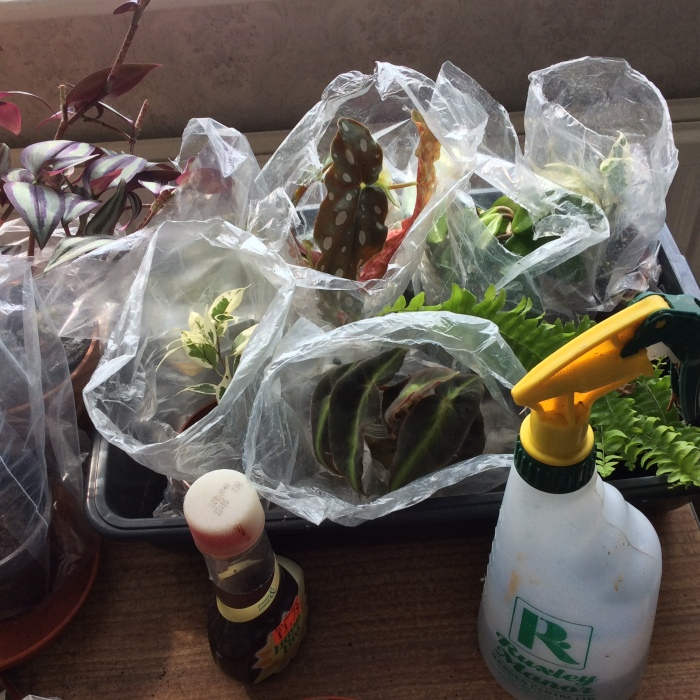 Houseplants cutting in polythene bags
