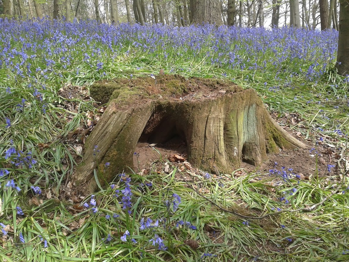 Fox hole in tree stump in spring wood