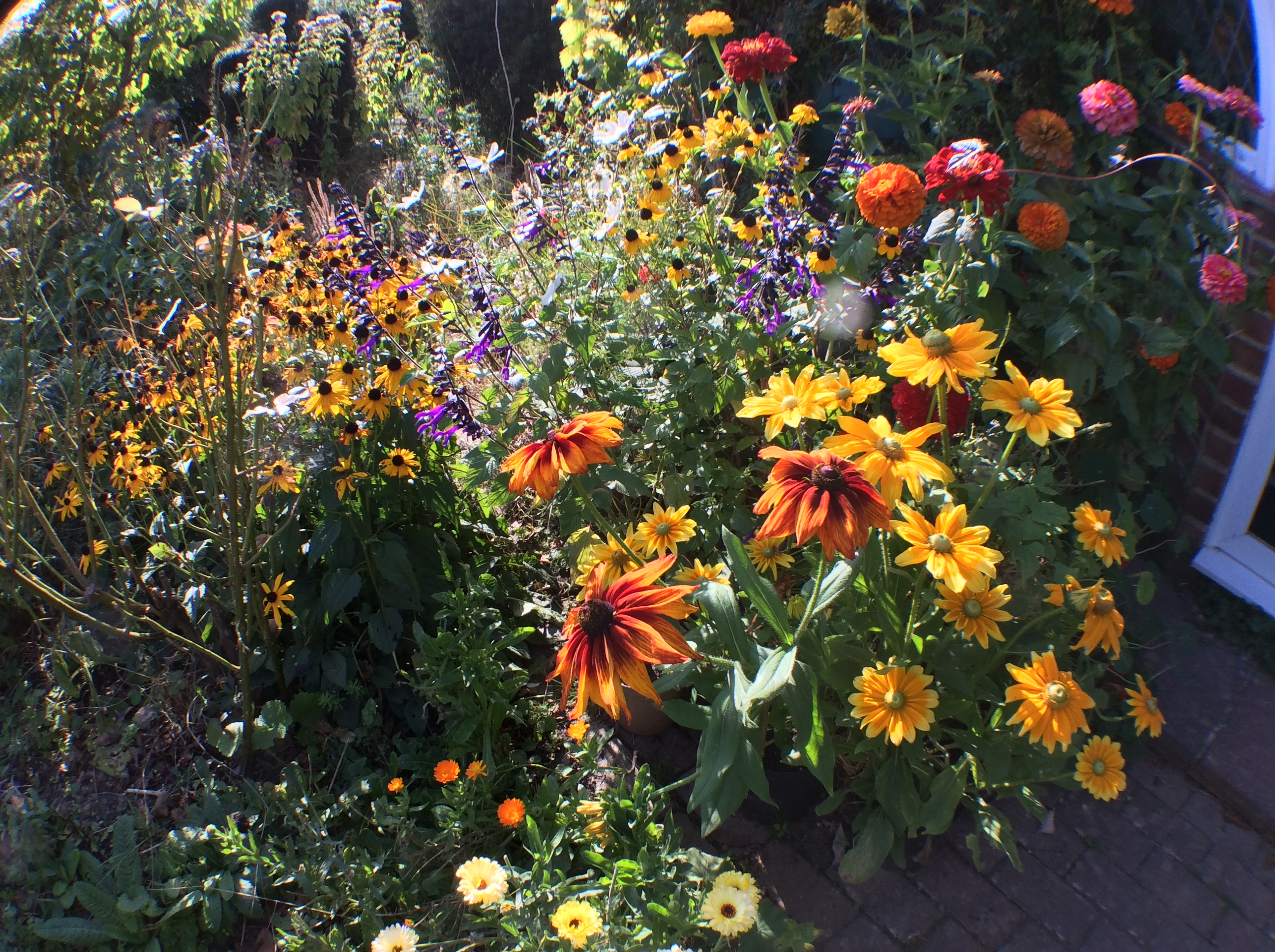Cheerful mix of annual flowers in sunshine