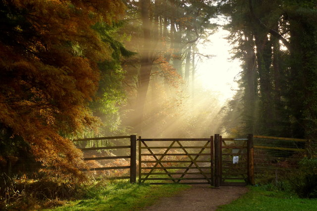Early morning sunlit glory in wood