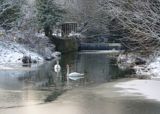 Two swans on frozen stream in winter