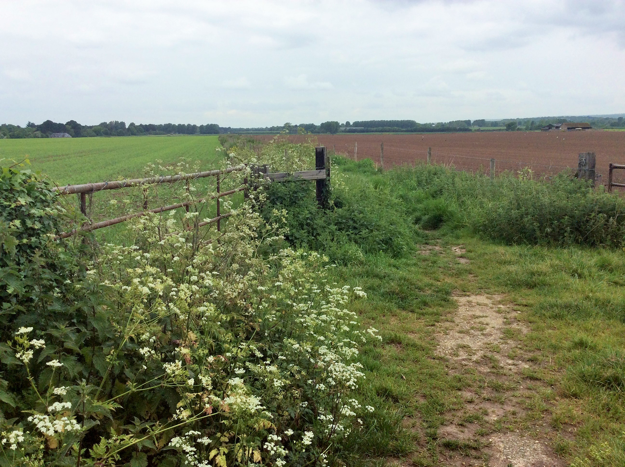 Footpath across fields