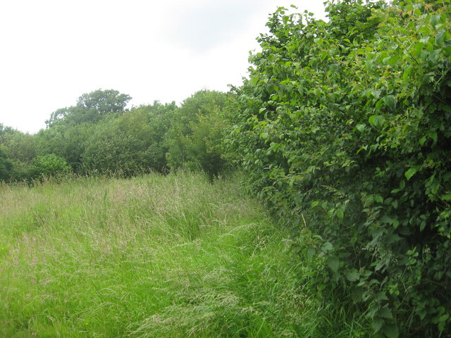 Hazel bushes in an unspoilt nature reserve