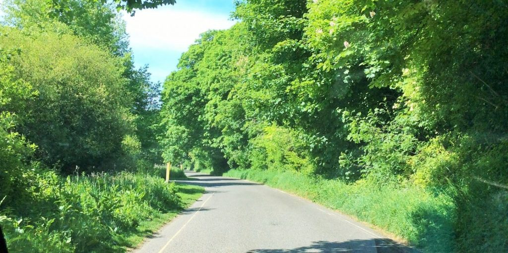 Country lane in May