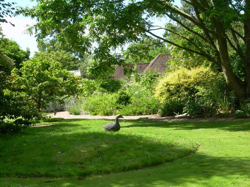 Shady lawn under ornamental trees at Denmans Garden, West Sussex.