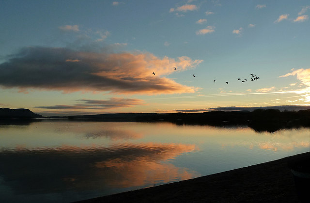 Wild geese at sunset over Loch Leven
