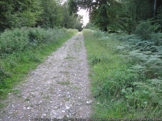 Old Roman road through Sussex woods