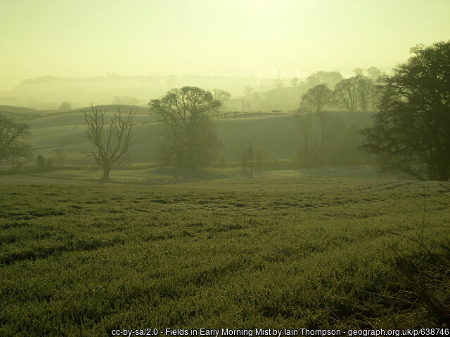 Early morning mists in field
