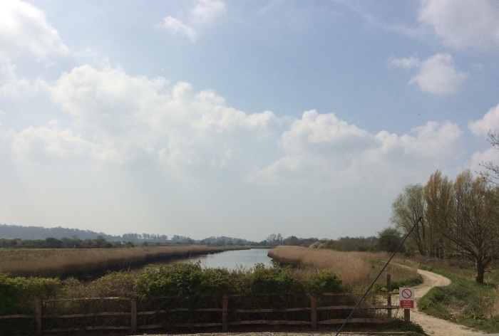 Reed beds beside the river Arun.