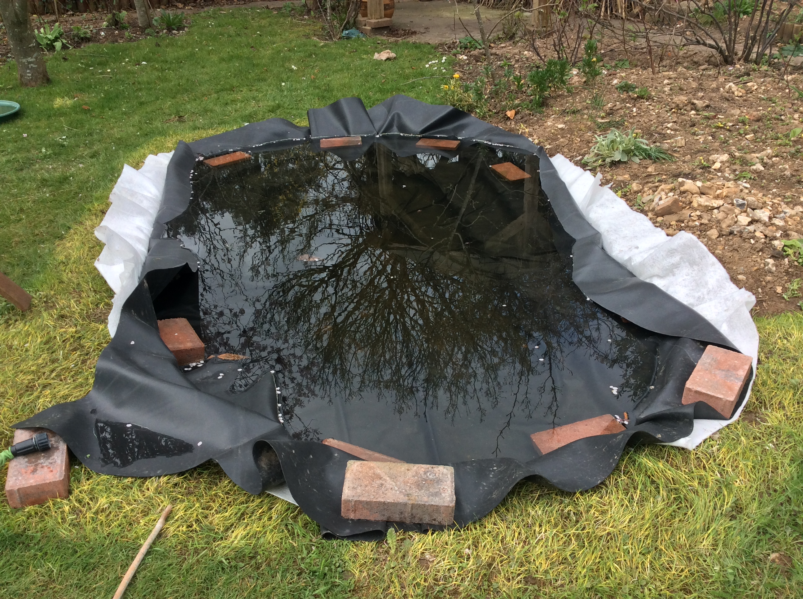 Wildlife pond filled with rainwater