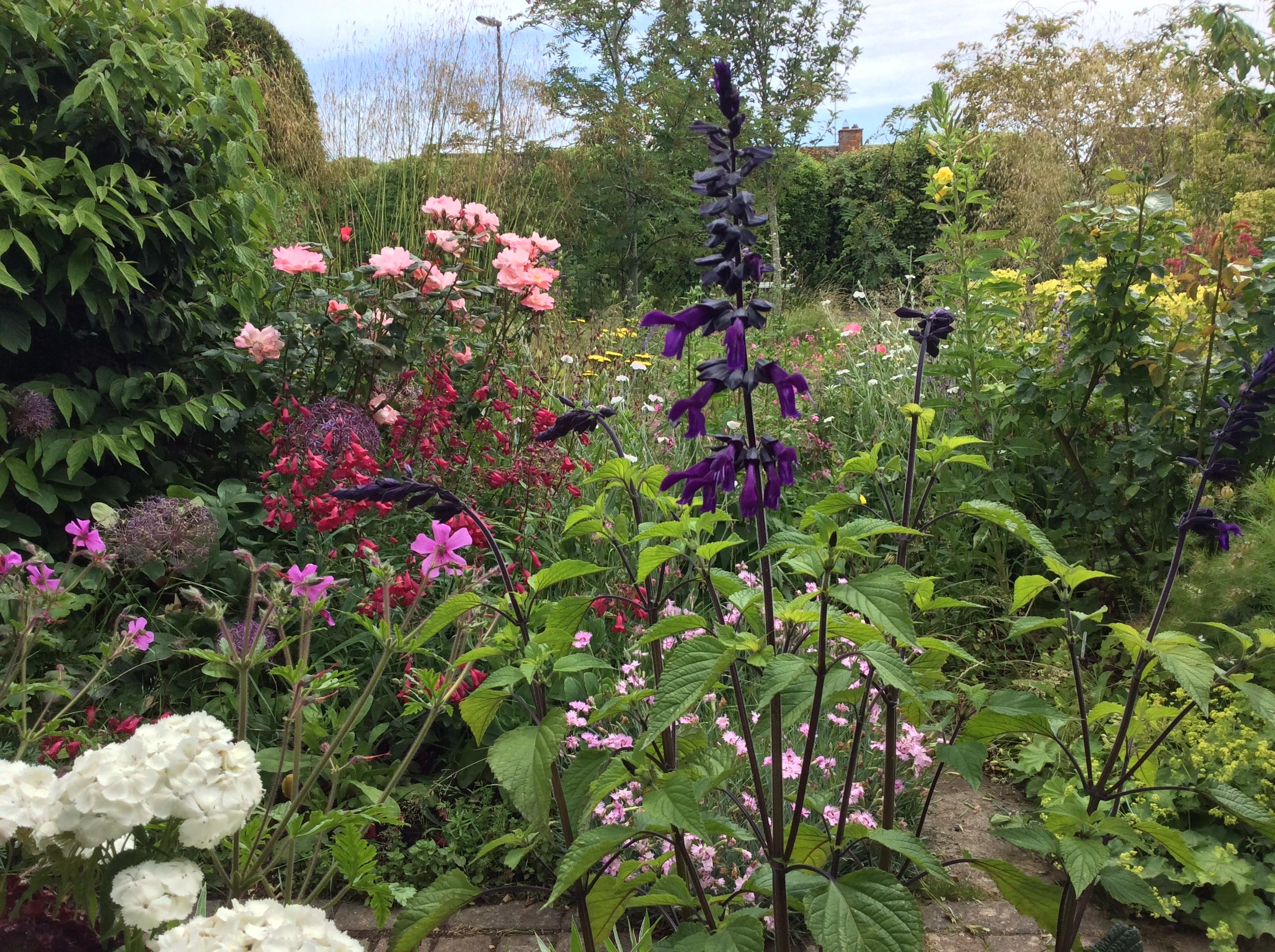 Flower garden with roses